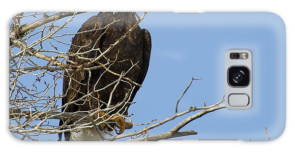 Bald Eagle And Branches 2 Galaxy Case