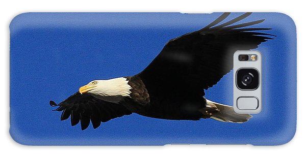 Bald Eagle Lock 14 Galaxy Case by Paula Guttilla