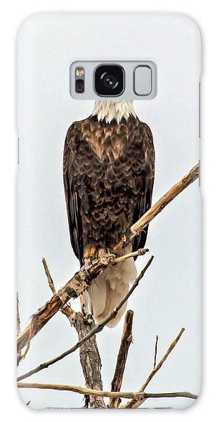 Bald Eagle On A Branch Galaxy Case