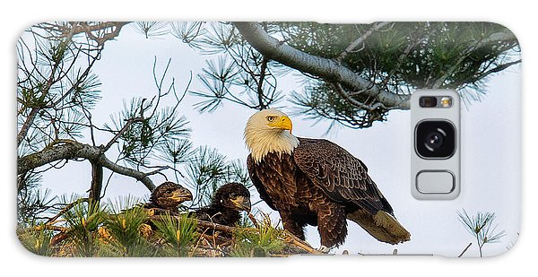 Bald Eagle With Eaglets  Galaxy Case