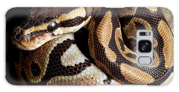 Ball Python Python Regius Galaxy Case by David Kenny
