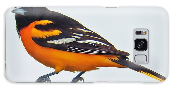 Baltimore Oriole Male Galaxy Case by Judy Via-Wolff