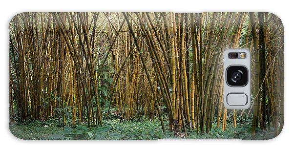 Bamboo Grove Galaxy Case