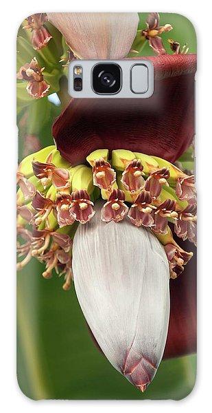 Hybrid Galaxy Case - Banana Palm Flower (musa Hybrid) by Maria Mosolova
