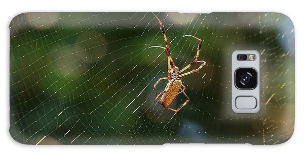 Banana Spider In Web Galaxy Case