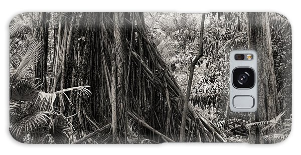 Strangler Fig And Cypress Tree Galaxy Case