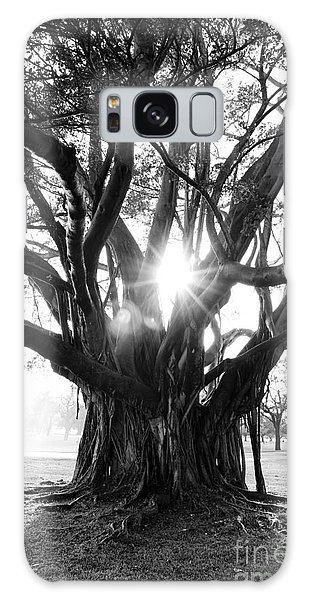 Banyan Tree Galaxy Case
