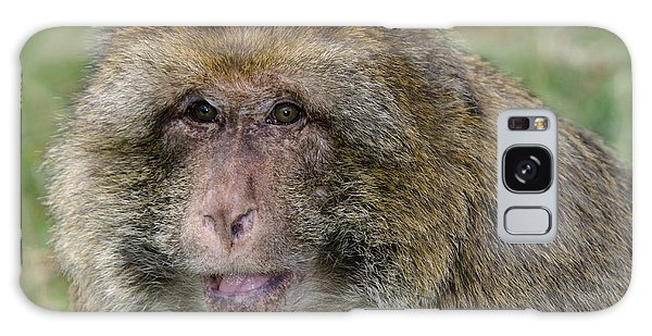 Barbary Macaque Galaxy Case by Nigel Downer