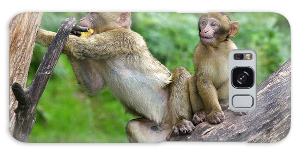 Barbary Macaques Galaxy Case by Nigel Downer