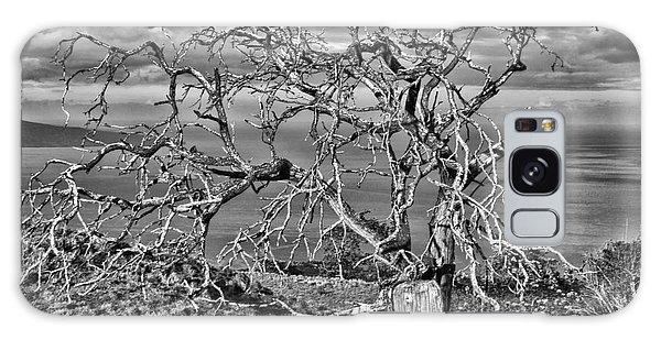 Bare Tree In Hana Galaxy Case