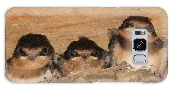 Barn Swallow Chicks 2 Galaxy Case
