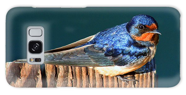 Barn Swallow Perching Galaxy Case by Bob and Jan Shriner