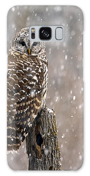 Barred Owl In A New England Snow Storm Galaxy Case