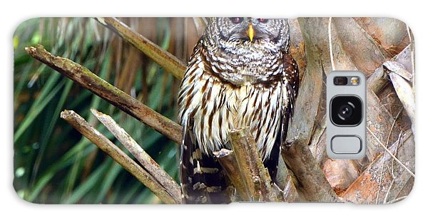 Barred Owl In Palm Tree Galaxy Case