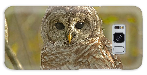 Barred Owl Looking At You Galaxy Case by Nancy Landry
