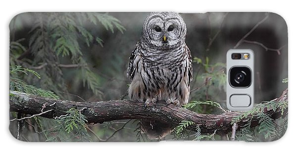 Barred Owl Stare Down Galaxy Case