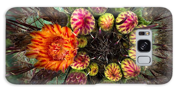 Barrel Cactus In Bloom 2 Galaxy Case