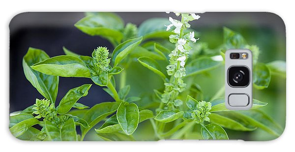 Basil With White Flowers Ready For Culinary Use Galaxy Case by David Millenheft