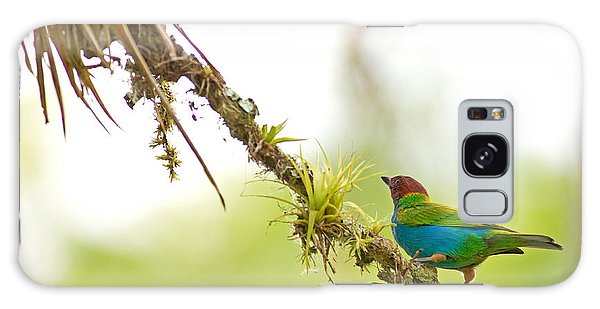 Bay-headed Tanager Galaxy Case