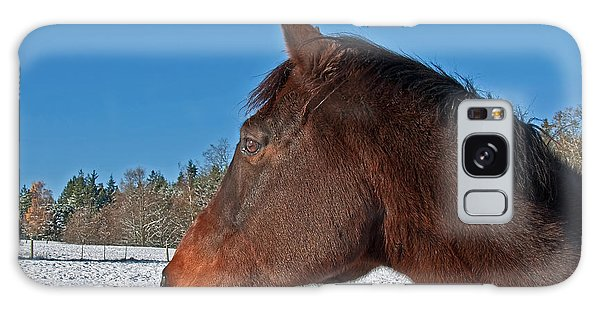 Bay Thoroughbred Horse Side View In Winter Galaxy Case