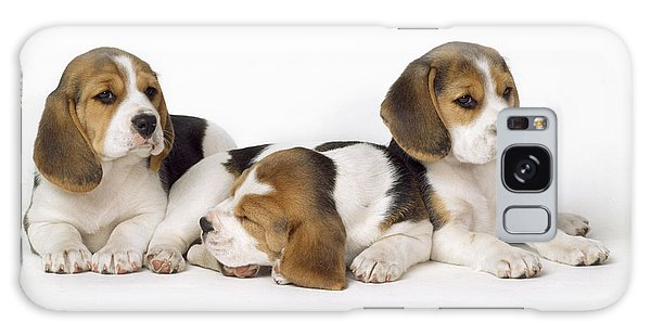 Beagle Puppies, Row Of Three, Second Galaxy Case