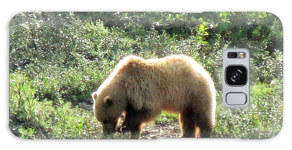 Bear At Denali Galaxy Case