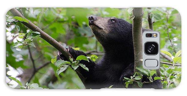 Brian Rock Galaxy Case - Bear Cub And Apples by Brian Rock