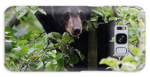 Brian Rock Galaxy Case - Bear Cub In Tree by Brian Rock