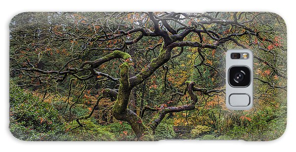 Beautiful And Bare Japanese Lace-leaf Maple Tree Galaxy Case