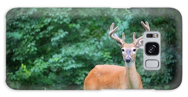 Beautiful Buck  Galaxy Case