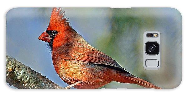 Beautiful Female Cardinal Galaxy Case