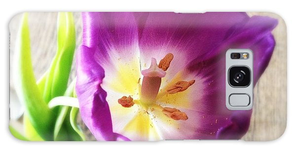 Beautiful Galaxy Case - Beautiful Purple Flower From Above by Matthias Hauser