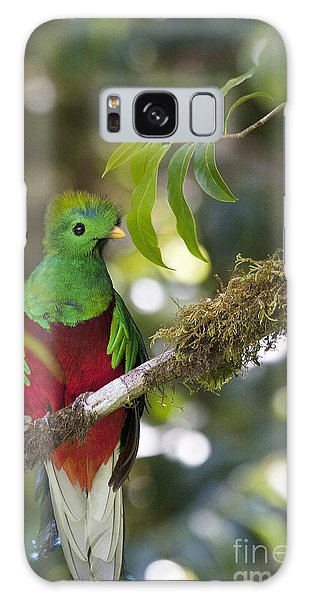 Galaxy Case featuring the photograph Beautiful Quetzal 1 by Heiko Koehrer-Wagner