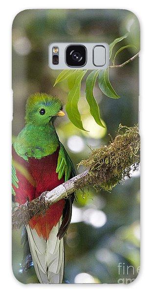 Beautiful Quetzal 1 Galaxy Case
