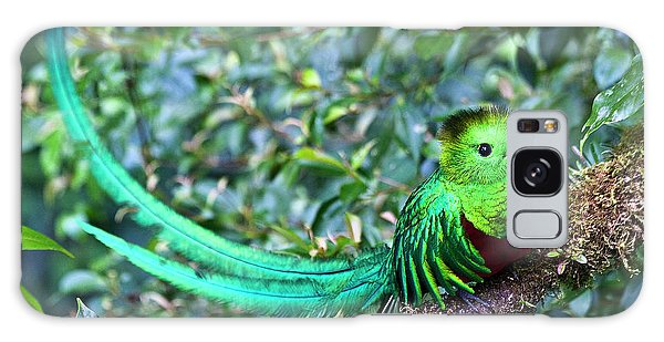Galaxy Case featuring the photograph Beautiful Quetzal 3 by Heiko Koehrer-Wagner