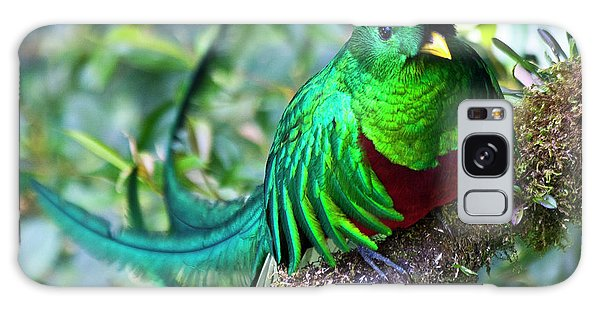 Galaxy Case featuring the photograph Beautiful Quetzal 4 by Heiko Koehrer-Wagner