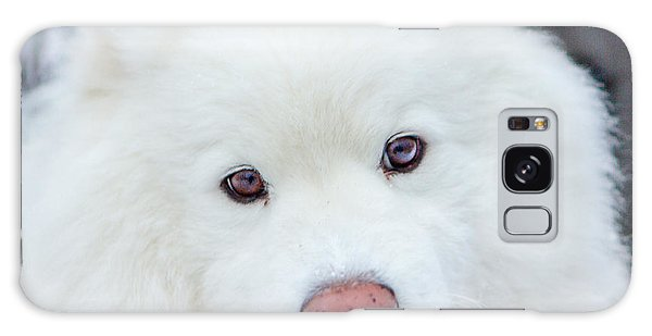 Beauty Of The Samoyed Galaxy Case