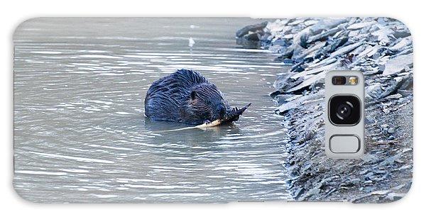Beaver Chews On Stick Galaxy Case by Chris Flees