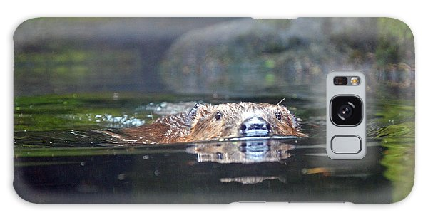 Beaver Swimming Galaxy Case