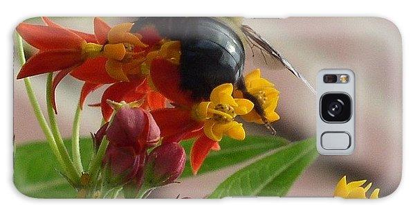 Bee Close Up Galaxy Case