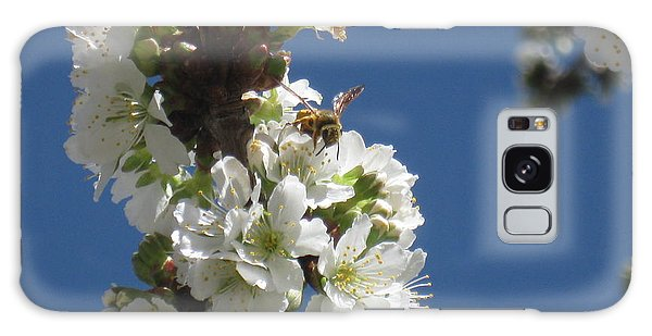 Bee On Cherry Blossoms Galaxy Case