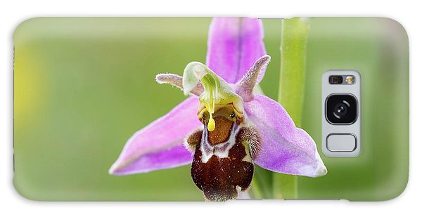 Orchidaceae Galaxy Case - Bee Orchid by Heath Mcdonald