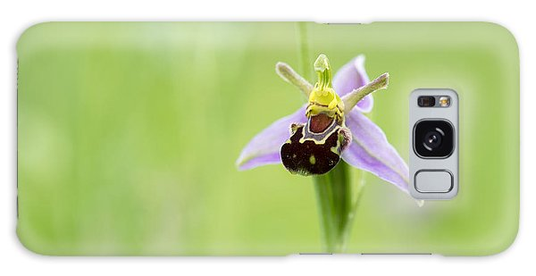 Orchidaceae Galaxy Case - Bee Orchid by Tim Gainey