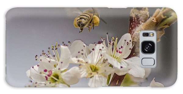 Bee Working The Bradford Pear 2 Galaxy Case