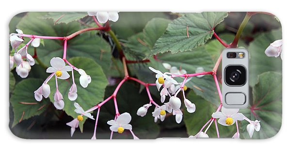 Begonia Olsoniae Galaxy Case