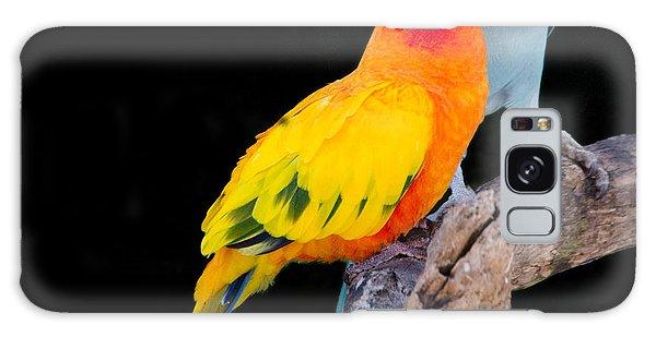 Sun Conure And Ring Neck Parakeet 2 Galaxy Case