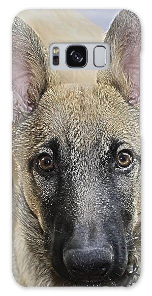 Belgian Malinois Puppy Portrait Galaxy Case