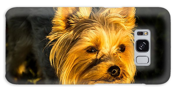 Bella The Wonder Dog Galaxy Case by Jay Stockhaus