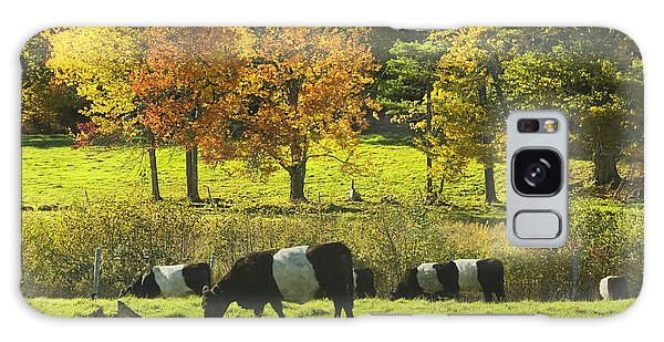 Belted Galloway Cows Grazing On Grass In Rockport Farm Fall Maine Photograph Galaxy Case by Keith Webber Jr
