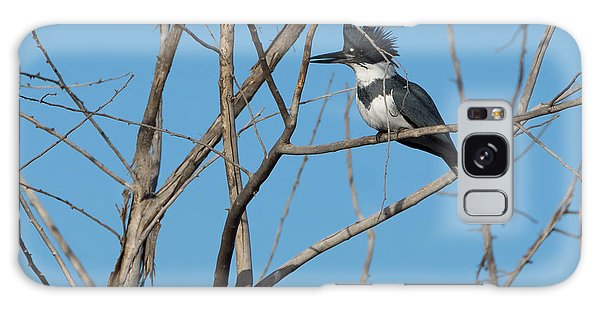 Belted Kingfisher 4 Galaxy Case